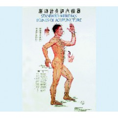 Beijing Acupuncture Institut, Official localisation of acupuncture points : 3 charts (1m x 0,80) + 1
