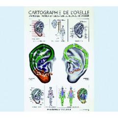 P.F.M NOGIER présenté par R. NOGIER Cartographie de l'oreille 40x60 Ed.SEDATELEC-PLPNRN01-FR