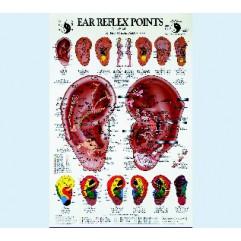 T. OLESON Ear reflex points chart (en anglais) 1 planche / 1 chart 75 x 120 cm Edit. HCA - USA-PLTOLE01-AN
